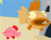 Ayvaryum Balığı Büyütme