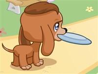 Frizbici Köpek
