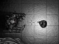 Karanlık Avcısı