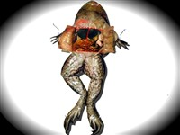 Kurbağa Ameliyatı