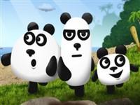 Maceracı Pandalar